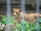 Zoo Targu Mures - Platoul Cornisa - Targu Mures
