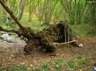 Copacul Cerbul Minune